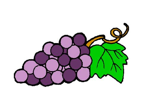 imagenes de uvas a color para imprimir dibujo de racimo de uvas pintado por p1a2 en dibujos net