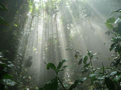 tropical plant biology impact factor abiotic factors ap biology