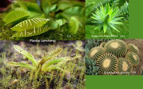 imagenes animales y plantas en peligro de extincion geovida a c plantas en peligro de extinci 243 n en m 233 xico