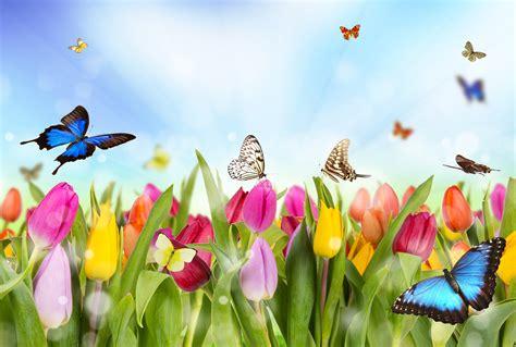 Original Mesin Jahit Butterfly Ja 1 photo butterflies tulips flowers
