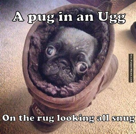 Pug Memes - animal memes pug in an ugg on the rug pugs pinterest