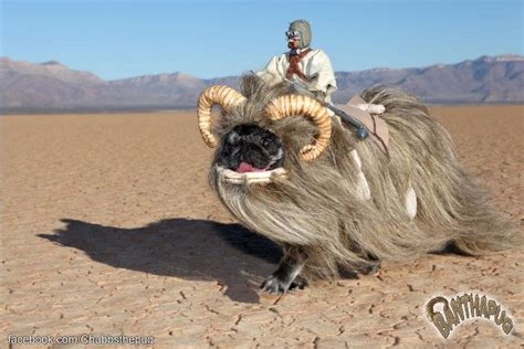 wars pug costume bantha pug costume brilliant scifi nerdery a it and the pug