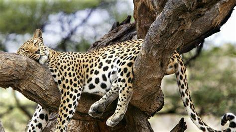 imagenes wallpapers hd animales animales salvajes 1366x768 fondos de pantalla y