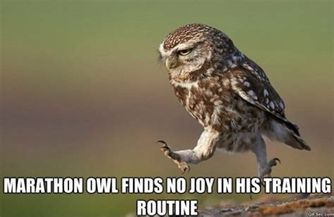 Who Owl Meme - owl meme