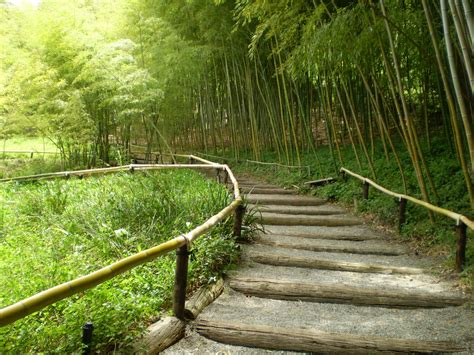 backyard bamboo garden bamboo garden ideas interior design ideas by interiored