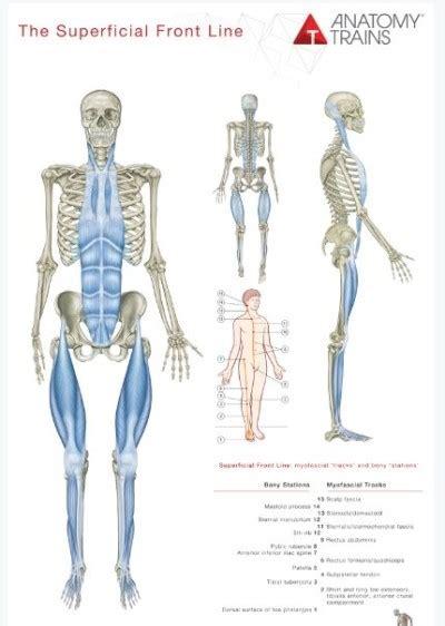 cadenas musculares thomas myers pdf 근막경선을 따라 어깨와 팔 손을 연결하는 방법 네이버 블로그