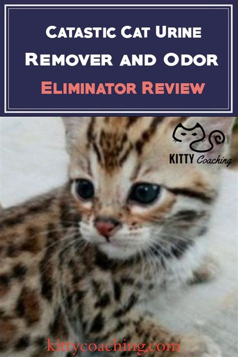 best cat urine remover lighter best way to clean out