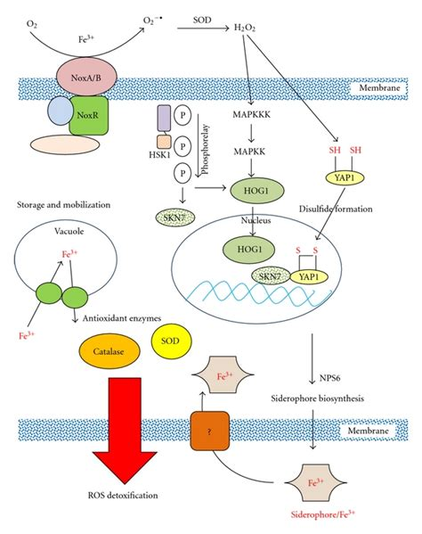 Pathogen Detox by Stress Response And Pathogenicity Of The Necrotrophic