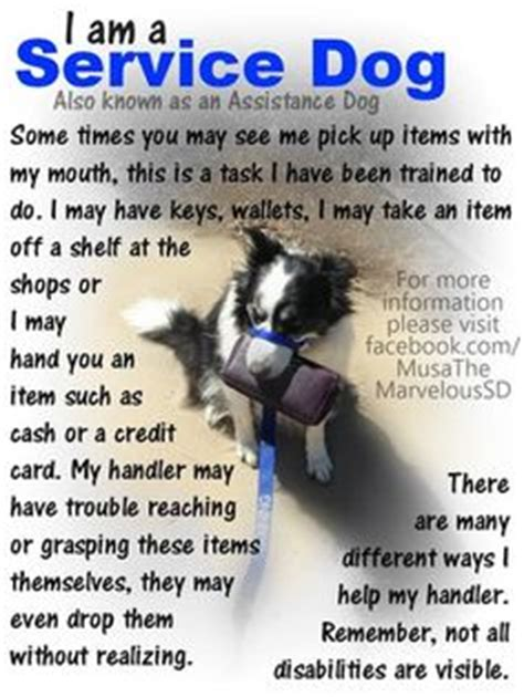 what can service dogs be trained to do educational sd posters on 16 pins