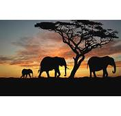 Sunset Nature Animals Wallpapers Africa Photos Pictures