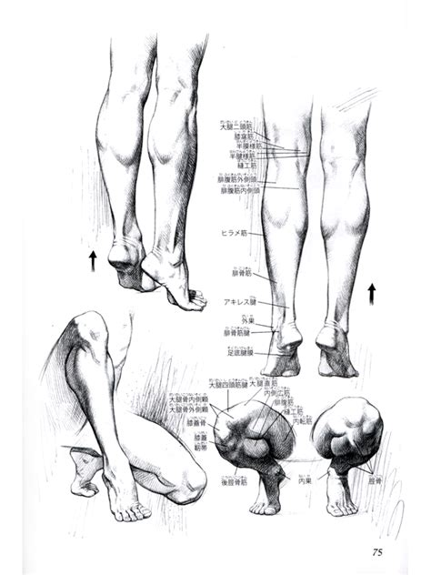 human anatomy artistic drawings of the human bones and