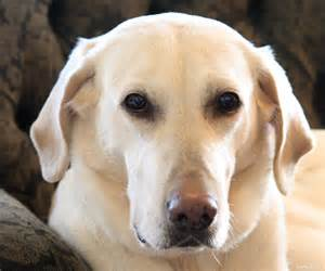 Dogs Gracie A Scattergun Dog Colorful Beauty