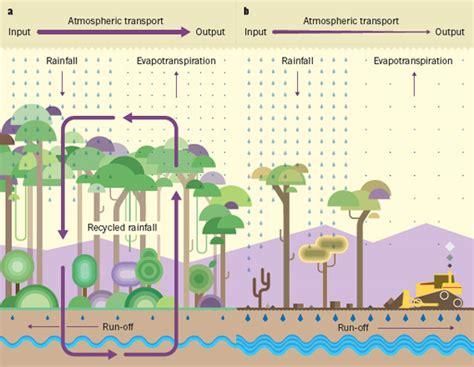 deforestation diagram deforestation could trigger drop in rainfall across