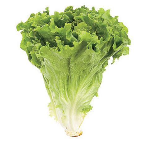 pictures 0f vegetables 구구스토리 상추의 효능 상추와 건강