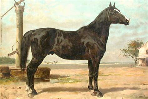 hungarian breeds breeds from hungary the equinest