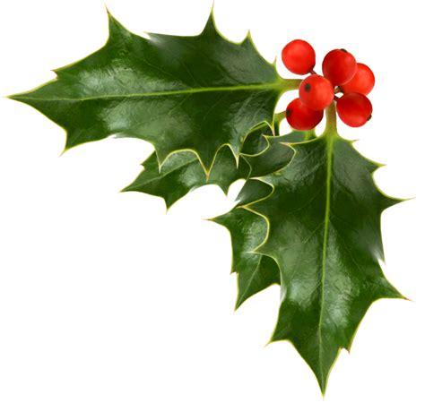 clipart holly christmas holly clip art clipartion