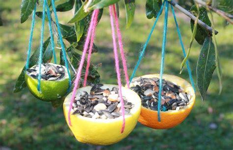 uccelli da appartamento come creare una mangiatoia per uccelli riciclando le bucce