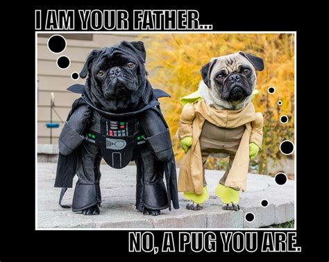 pug wars wars pugs darth vader and yoda hilarious wars war and pug