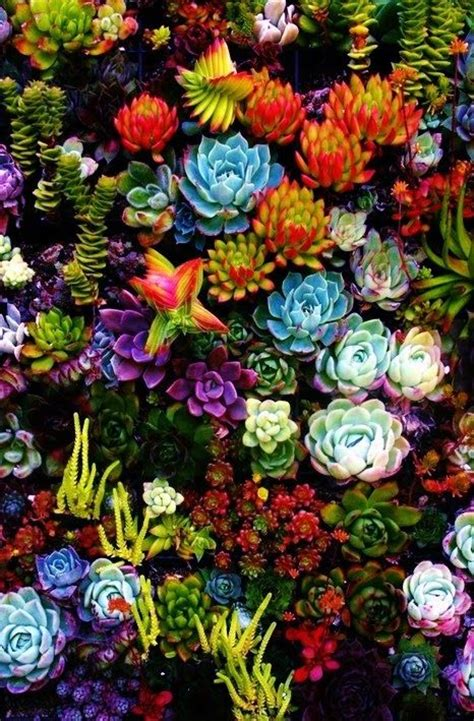 succulents i love the bright colors floral hunters pinterest gardens beautiful and deserts
