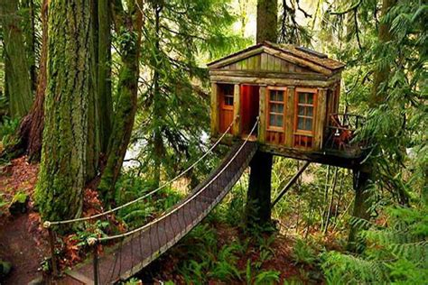 tree house airbnb whoa you can rent a sweet tree house on airbnb steve aoki