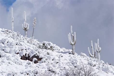 desert snow desert snow 1funny