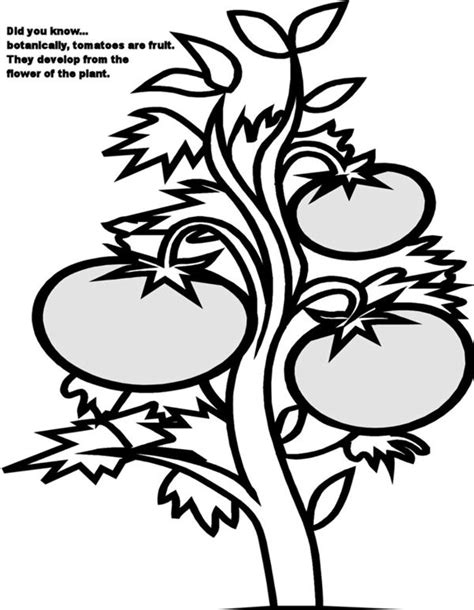 Free Coloring Pages Of Plant A Tree Plants Coloring Pages