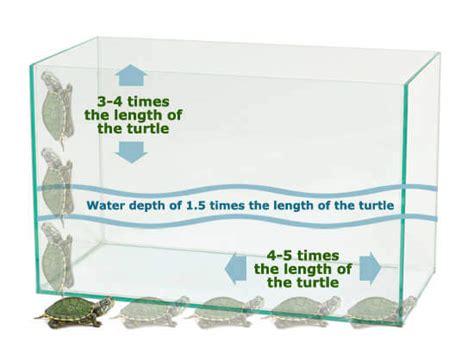 turtle aquarium tank    care   turtle