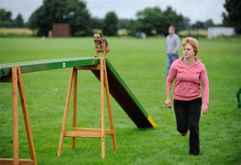 how to start agility for dogs your how to get started in agility activities care and advice
