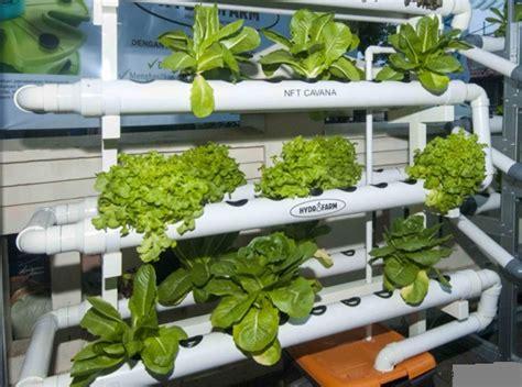 membuat hidroponik organik membuat nutrisi hidroponik secara organik cara menanam