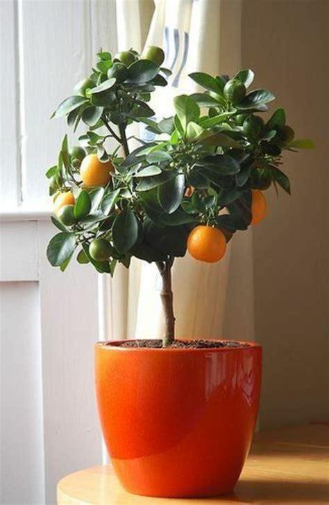 pflanzen zu hause 52 frische ideen f 252 r zimmerpflanzen