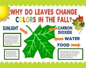 why do the leaves change colors make a science fair project poster ideas why do leaves