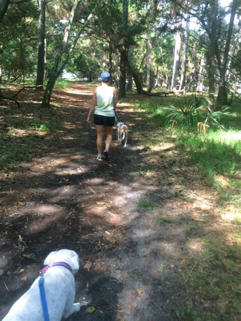 rough house dog daycare dog walking in st augustine fl ruff house south 904 800 8254