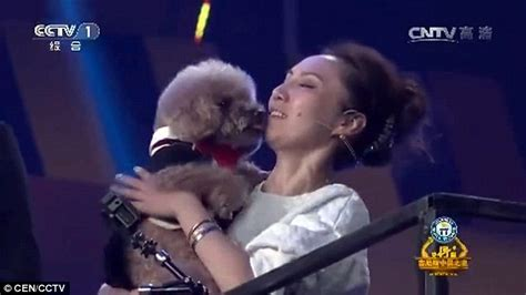 losing balance in hind legs arsenal the poodle climbs a flight of stairs on two legs on beijing tv daily mail