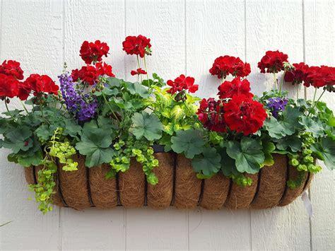 ultimate geranium container gardens