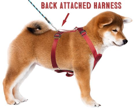 types of harnesses what s better for your shiba inu a harness or a collar my shiba inu