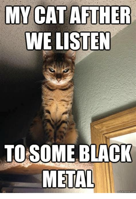 Black Metal Memes - my cat afther we listen to some black metal quick meme com