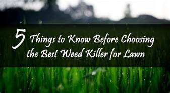 Best Patio Weed Killer by Best Weed Killer Spray For Lawn Review 5 Things To Know