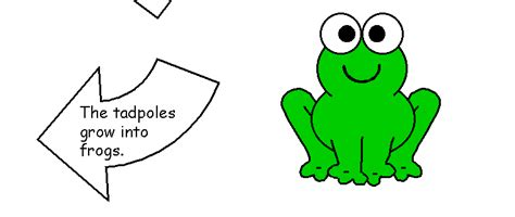 life cycle stages template life of a frog