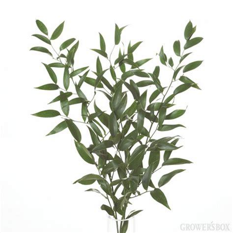 italian ruscus italian ruscus flower arranging class pinterest