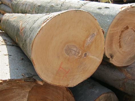 woodworking with logs beech wood logs
