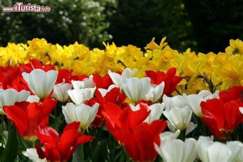 foto fiori coloratissimi particolare dei coloratissimi fiori incontrate