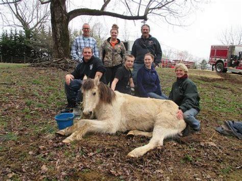 P 3116 Fork Animal Friends virginia family pet festival in fredericksburg june 4