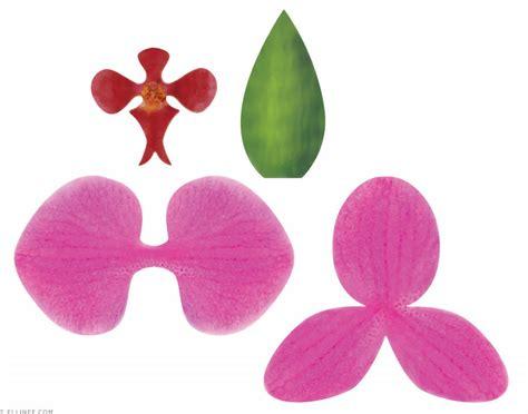 orquidea de papel crepe molde de orquideas imagui