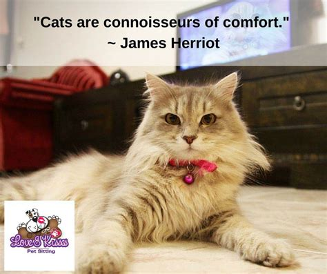 how to comfort a cat what type of food should i feed my cat pet sitter dog