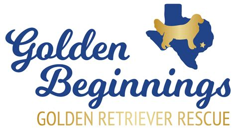golden beginnings golden retriever rescue home golden beginnings golden retriever rescue