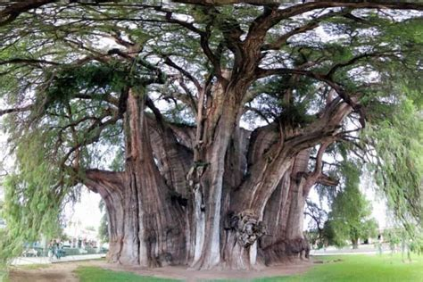 Trees From Around The World 10 of the strangest trees around the world