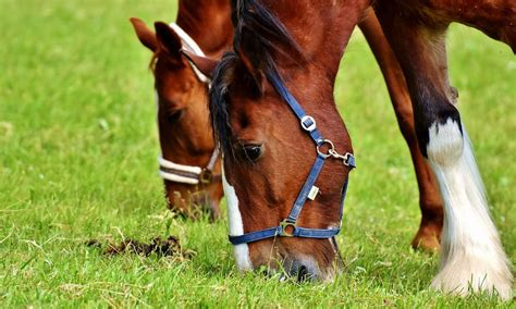 how much do havoc boats weigh a deworming schedule to keep your horse protected