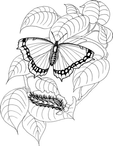 caterpillar and butterfly 2 coloring page supercoloring com caterpillar and butterfly 4 coloring page free printable