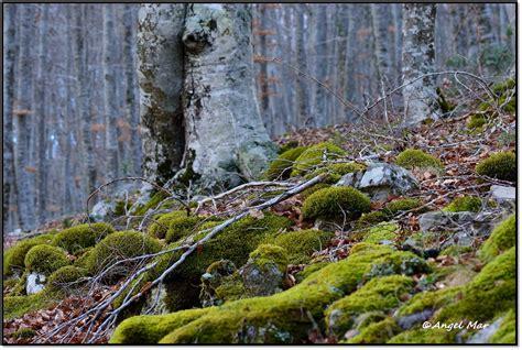 Flores Y Bichos Un Paseo Invernal Por El Bosque