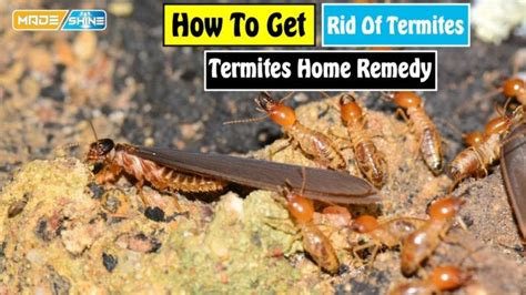 How To Get Rid Of Termites In Kitchen Cabinets Remove Bed Bugs 28 Images Checking For Bugs 4 Bed Bug Guys How To Get Rid Of Bed To Get Rid